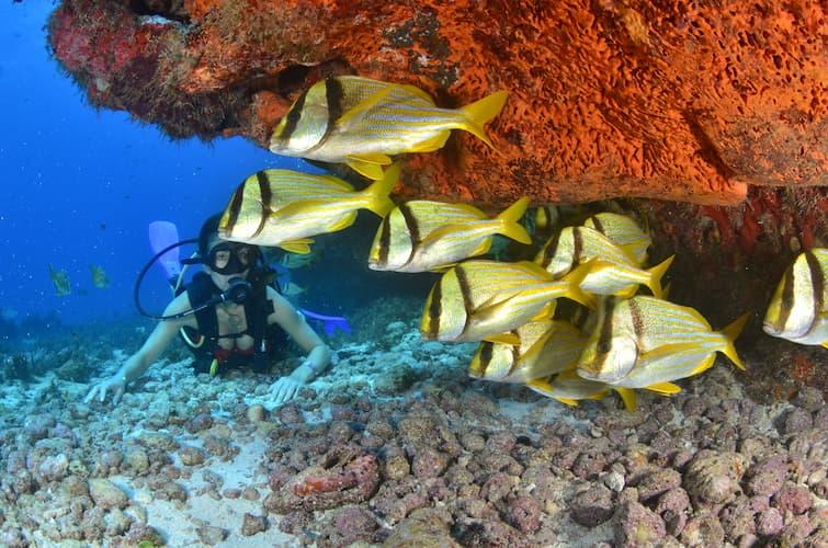snorkel-reef-and-catamaran