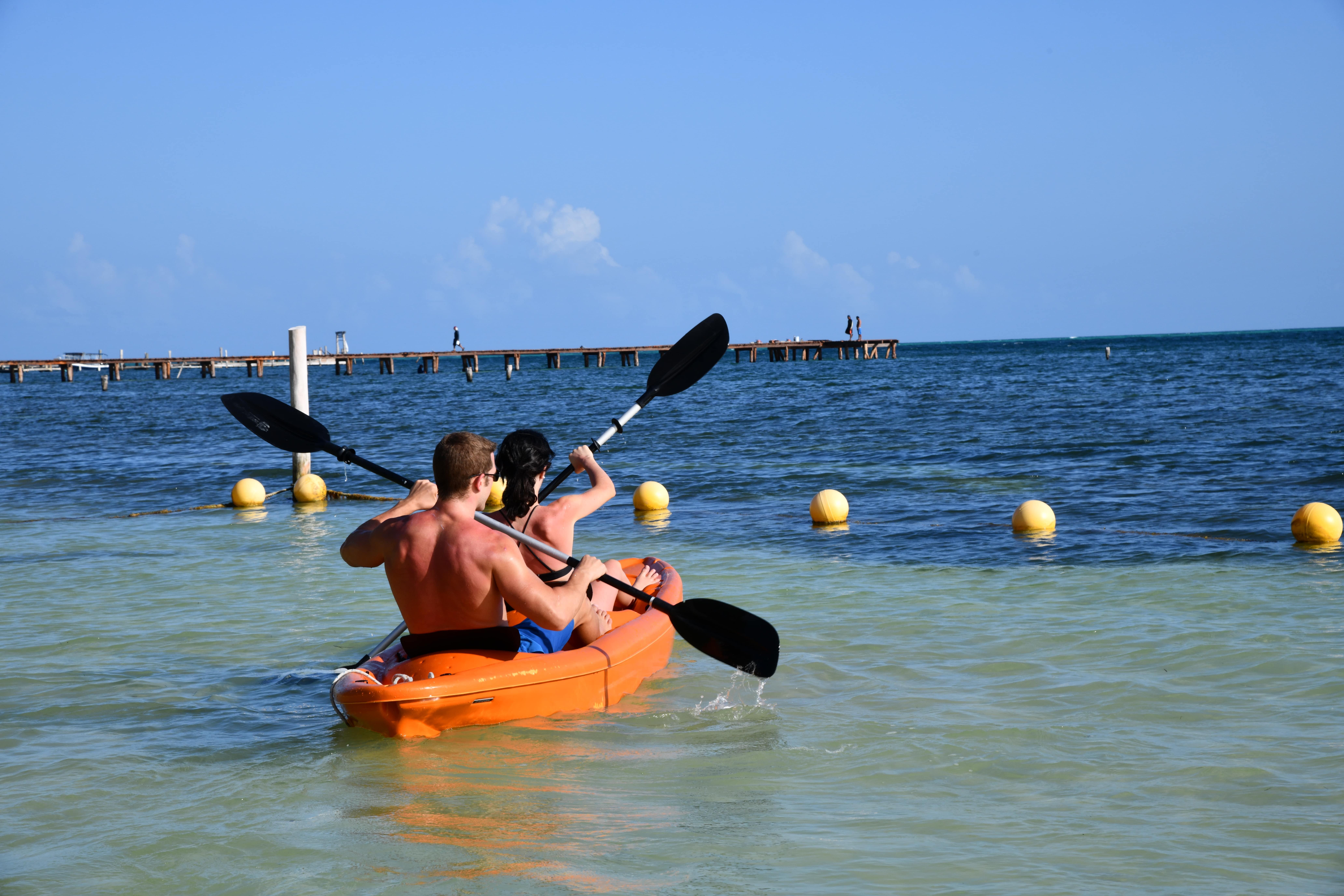 Kayak + Albatros